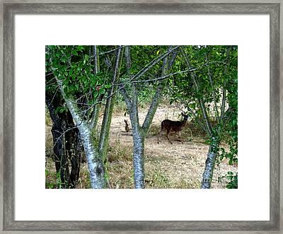 Rabbit Spying On Buck In Velvet Framed Print by The Kepharts
