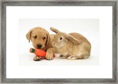 Rabbit Watches Pup With Carrot Squeaky Framed Print by Jane Burton