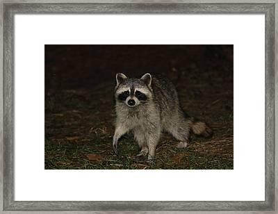 Raccoon Framed Print by Lali Partsvania