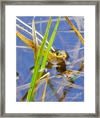 Racing Colors Framed Print by KD Johnson