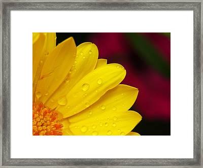 Radial Framed Print by Rob Amend