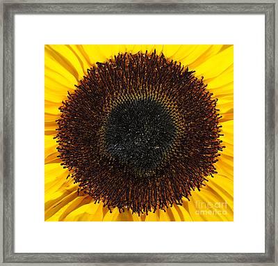 Radiance Framed Print by Luke Moore