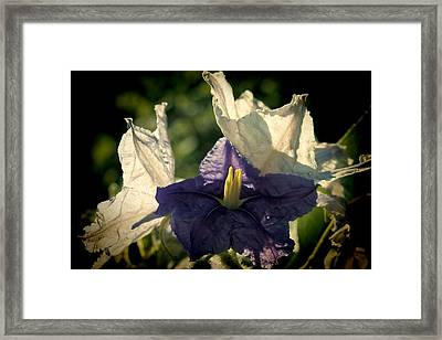 Framed Print featuring the photograph Radiance by Steven Sparks