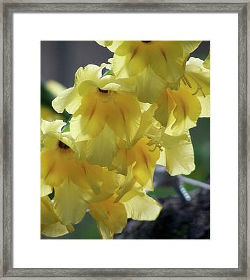 Framed Print featuring the photograph Radiance by Thomas Woolworth
