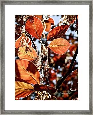 Radiant Sparkle II Framed Print by Rotaunja