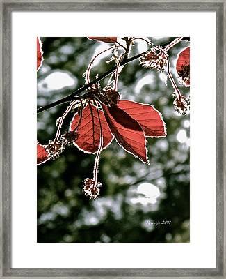 Radiant Sparkle Framed Print by Rotaunja