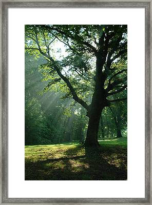 Framed Print featuring the photograph Radiant Tree by Peg Toliver