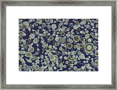 Radiolarian Ooze Lm Framed Print by M. I. Walker