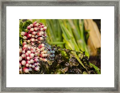 Radishes At The Market Framed Print by Heather Applegate