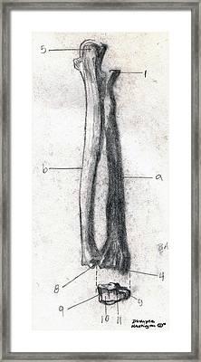 Radius And Ulna Framed Print by Duwayne Washington