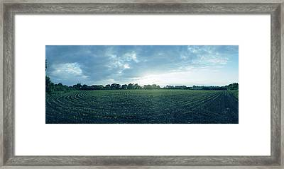 Raf Winkton Cornfield Framed Print by Jan W Faul
