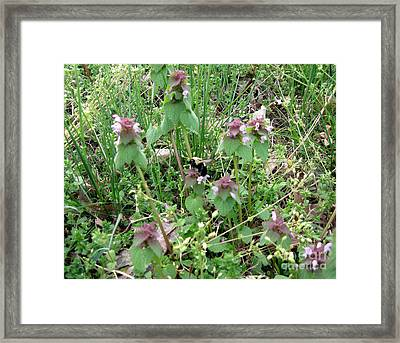 Ragweed Bumble Bee Framed Print by The Kepharts