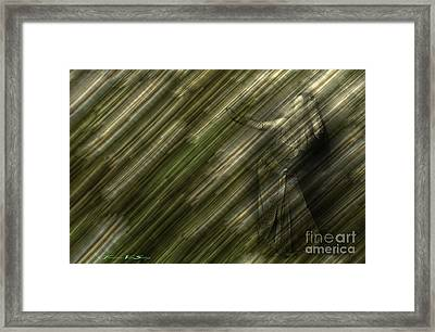 Rain Dances On The Rattan Cane Framed Print by The Stone Age