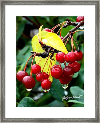 Rain Drenched Framed Print by Ruth Bodycott