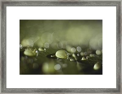 Rain Drops Landing On A Green Surface Framed Print