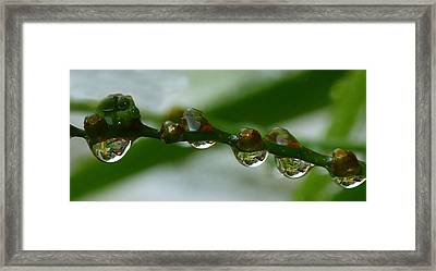 Framed Print featuring the photograph Rain Drops by Lynn Bolt