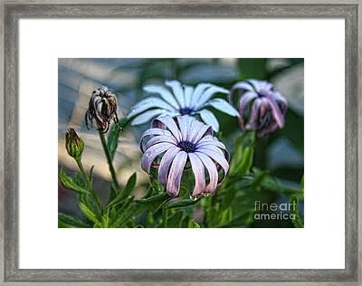 Rain Drops On Flowers Framed Print by Billie-Jo Miller