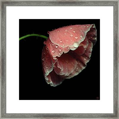 Rain Drops On Pink Poppy Framed Print