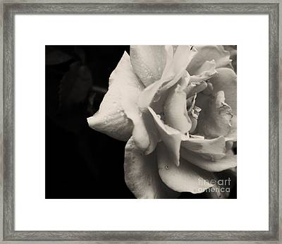 Framed Print featuring the photograph Rain Drops On Roses by Julie Clements
