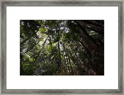 Rain Forest Canopy In Bako National Framed Print by Mattias Klum