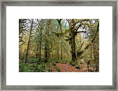 Rain Forest In Fall Framed Print