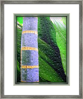 Rain Forest Framed Print by Mindy Newman