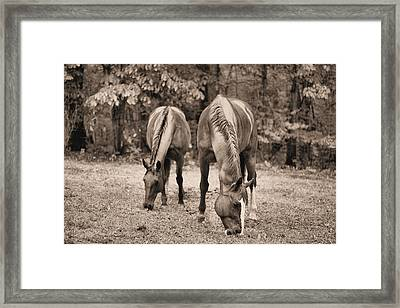 Rain In Horse Country Framed Print by JC Findley