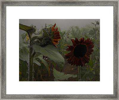 Framed Print featuring the photograph Rain In The Sunflower Garden by Diannah Lynch