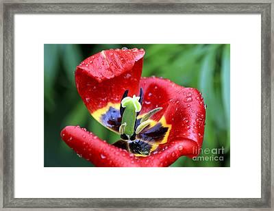 Rain Kissed Framed Print
