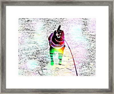 Rainbow Anxious Black Lab Framed Print by Barbara Griffin