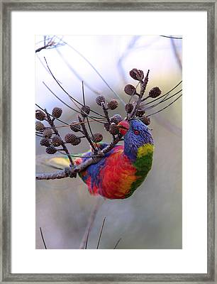 Rainbow At Play Framed Print