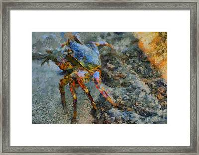 Rainbow Crab Framed Print