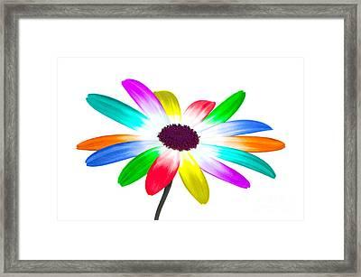 Rainbow Daisy Framed Print