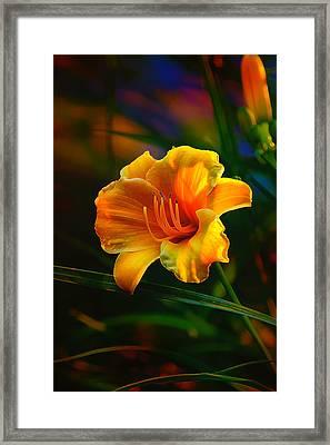 Rainbow Daylily Heat Framed Print by Bill Tiepelman