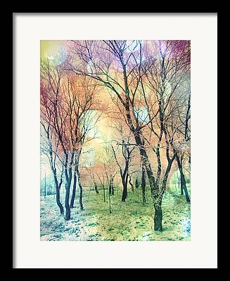 Pink Black Tree Rainbow Photographs Framed Prints