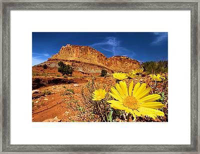 Rainbow Garden Framed Print