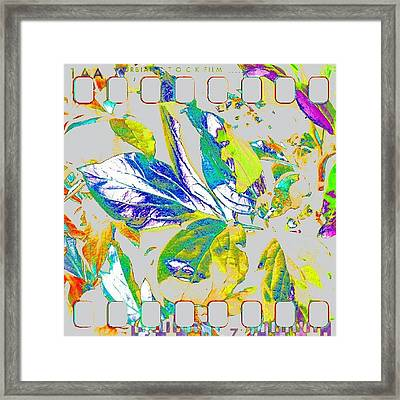 Rainbow Leaves Abstract #android Framed Print