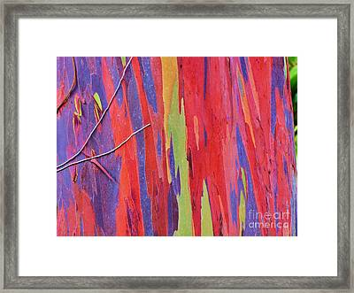 Framed Print featuring the photograph Rainbow Of Eucalyptus Bark by Michele Penner