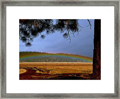 Rainbow Ridge Framed Print by Cindy Wright