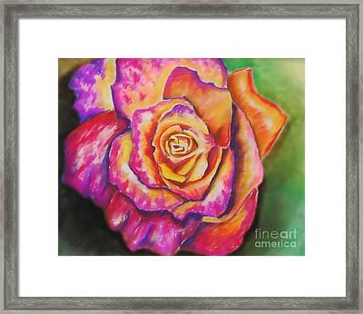 Rainbow Rose Framed Print by Alissa  Skoczelak