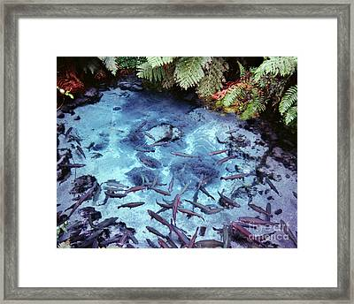 Framed Print featuring the photograph Rainbow Springs by Mark Dodd