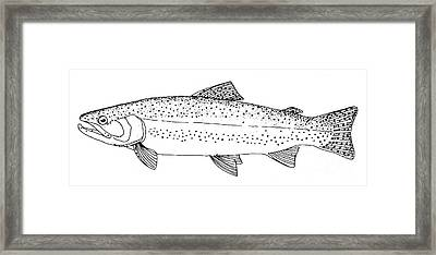 Rainbow Trout Framed Print by Granger