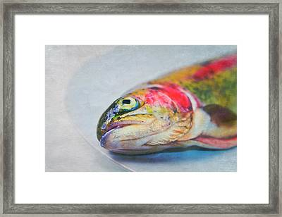 Rainbow Trout On Plate Framed Print by Image by Catherine MacBride