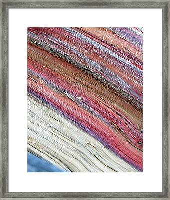 Framed Print featuring the photograph Rainbow Wood by Lisa Phillips
