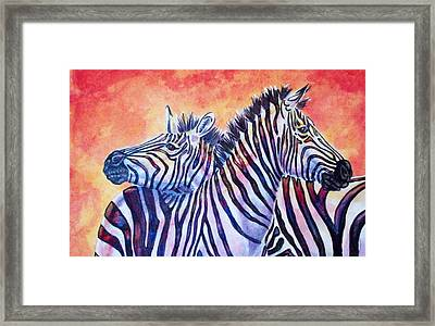 Rainbow Zebras Framed Print by Diana Shively
