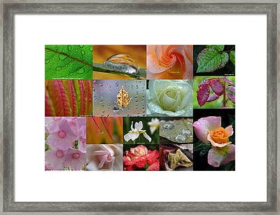 Raindrop Photography Artwork Framed Print by Juergen Roth