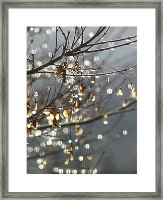 Raindrops And Leaves Framed Print