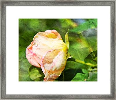 Raindrops And Roses Framed Print