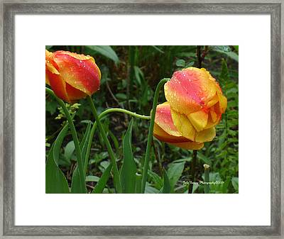 Raindrops And Tulips Framed Print