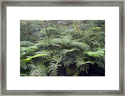 Raindrops Collect On Ferns Framed Print by Stacy Gold